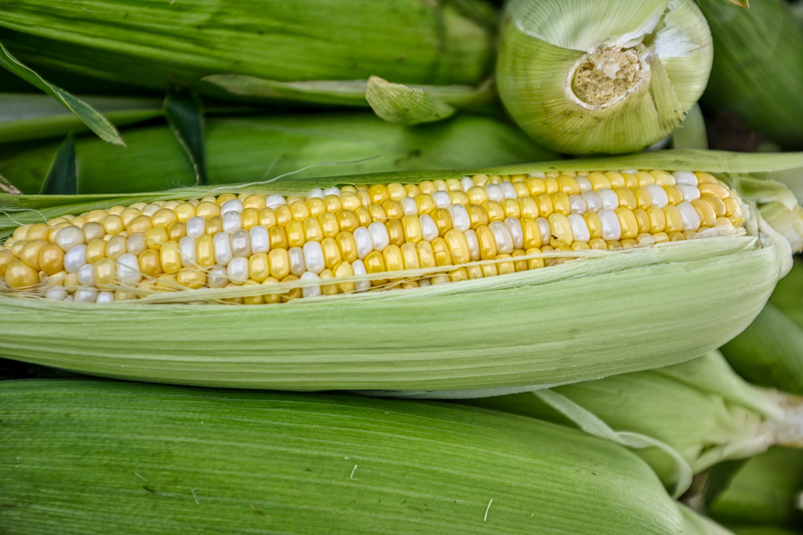 GMO – Dispelling The Myths About GM Food And Crops