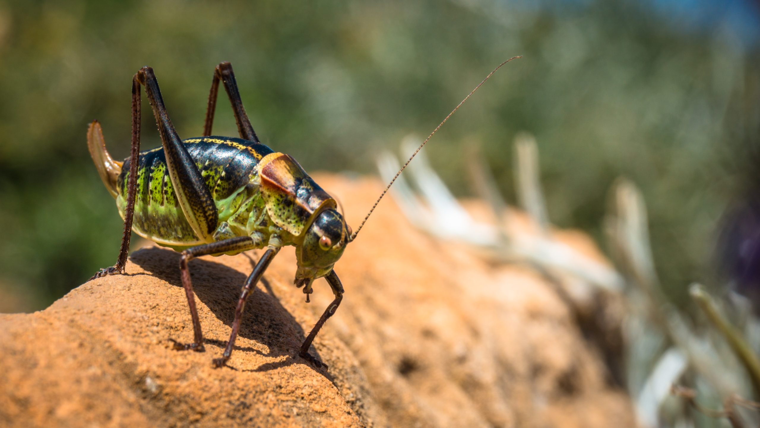 Insects… The Next Super Food or Ingredient?
